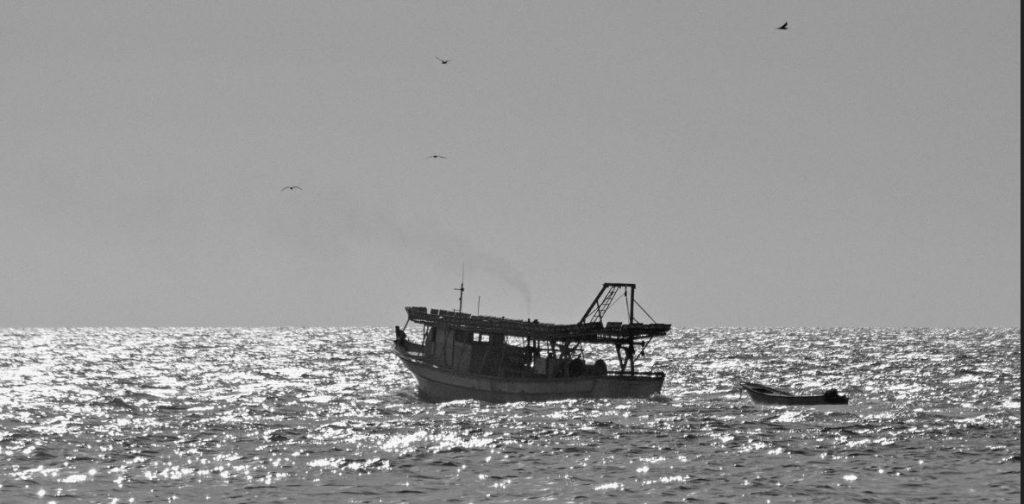 Captura segarra mar